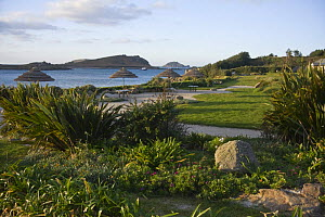 St. Martin's on the Isle Hotel garden, Isles of Scilly. December 2008.  -  Merryn Thomas