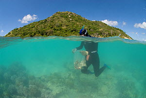 Charlotte Watson snorkels down to collect sand which may contain polychaete worms, Coral Reef census, Lizard Island, Queensland, Australia, April 2008. Model released  -  Jurgen Freund