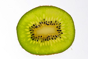 Cross-section of Chinese Gooseberry / Kiwi fruit (Actinidia chinensis) showing fruit flesh and seeds, native to China, New Zealand - Philippe Clement