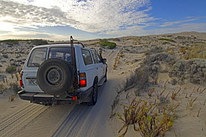 Jeep travelling along sandy track in Coffin Bay National Park, South Australia, Spring 2007  -  Steven David Miller