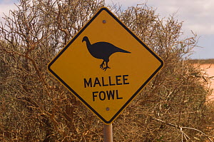 A sign warns drivers to watch for passing Malle fowl; one of the species that has been reintroduced to the park under Project Eden, Peron Road, Francois Peron National Park, Western Australia  -  Steven David Miller