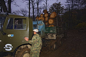 Illegal logging operation found by Siberian tiger anti-poaching patrol, 600 miles north of Vladivostok, Primorsky, Russian Far East, October 2005  -  Mark Carwardine