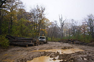 Illegal logging camp found by Siberian tiger anti-poaching patrol, 600 miles north of Vladivostok, Primorsky, Russian Far East, October 2005  -  Mark Carwardine