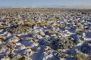 Light covering of snow, Pebble Island, off the north coast of West Falkland, Falkland Islands, November 2007  -  Pete Oxford