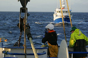 Crewmen shakle trawl warp to the net, with partner vessel coming alongside in the background, for pair trawling. North Sea, September 2008. Model released. - Philip Stephen