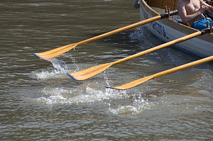 """Oars of Cornish pilot gig """"Young Bristol"""" during the """"Bristol Challenge"""" race along the River Avon, March 21st 2009. - Rob Cousins"""