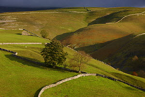 Stone walls and barns nr Kettlewell, Wharfedale, Yorkshire Dales National Park, England, UK, October 2008  -  David Noton