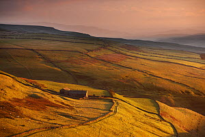 Evening light on the stone walls and a farms of Wharfedale, nr Kettlewell, Yorkshire Dales National Park, England, UK, October 2008  -  David Noton