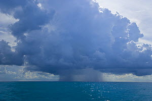 Rain falling from cumulonimbus clouds over the sea, Bahamas, Caribbean  -  Juan Carlos Munoz