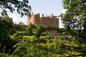 Powis Castle and with late renaissance terrace gardens and clipped Yew trees (Taxus baccata), Welshpool, Powys, Wales, UK, July 2008  -  Will Watson