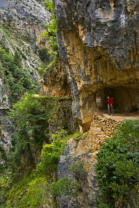 Hiker on the Ruta del Cares path where it is cut into the mountainside, Pico de Europa NP, Leon, Northern Spain  October 2006 - Juan Carlos Munoz