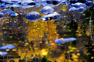 Trees reflected in water on the banks of the River Orkla, Norway, September 2008  -  Wild Wonders of Europe / Lundgren