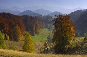 Pastures and forest covered hills, Piatra Craiului National Park, Transylvania, Southern Carpathian Mountains, Romania, October 2008  -  Wild Wonders of Europe / Döerr