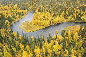 Kitkajoki River, Oulanka National Park, Finland, September 2008. Woodland predominantly Spruce (Picea abies) and Silver Birch (Betula verrucosa)  -  Wild Wonders of Europe / Widstrand