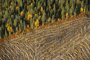 Aerial view of deforestated area of Siberian forest, Oulanka, Finland, September 2008  -  Wild Wonders of Europe / Widstrand
