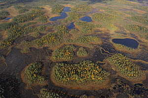 Aerial view of Peat bog, Oulanka National Park, Finland, September 2008  -  Wild Wonders of Europe / Widstrand