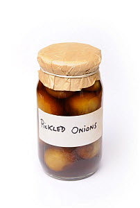 Jar of home made pickled Onions, UK  -  Gary K. Smith