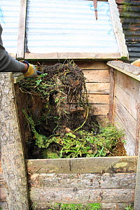 Gardener filling a compost bin, mixing the material by moving from bin to bin, UK, model released  -  Dave Bevan