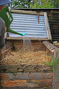 Gardener filling a compost bin, adding water to dampen the dry straw, UK, model released  -  Dave Bevan