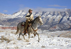 Cowboy on grey Quarter horse trotting in the snow at Flitner Ranch, Shell, Wyoming, USA Model released - Carol Walker