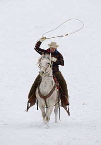 Cowboy riding in snow throwing a loop, Flitner Ranch, Shell, Wyoming, USA  -  Carol Walker