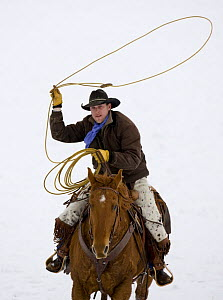 Cowboy riding in snow throwing a loop, Flitner Ranch, Shell, Wyoming, USA Model released  -  Carol Walker