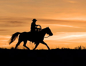 Silhouette of cowboy trotting at sunset, Flitner Ranch, Shell, Wyoming, USA Model released  -  Carol Walker