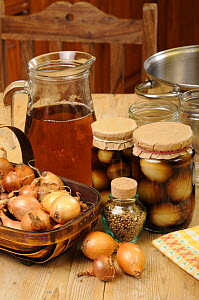 Country kitchen scene with home made jars of pickled onions and in gredients - pickling onions (Allium cepa) vinegar and pickling spice, UK, September.  -  Gary K. Smith