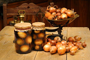Country kitchen scene with home made jars of pickled onions (Allium cepa) and scales, UK, September.  -  Gary K. Smith