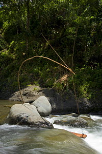 Device that uses water to pull a long line going up to the ricefields to wave a the flag that frightens away birds, Banaue Rice Terraces, Philippines. UNESCO World Heritage Site 2008 - Jurgen Freund