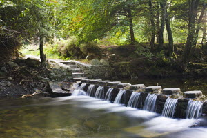 Stepping stones crossing a cascading stream in Tollymore Forest Park, County Down, Northern Ireland.  -  Adam Burton