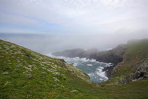 Skomer Island, mist clearing over cliffs and sea shore. Pembrokeshire Coast National Park, West Wales, UK. April 2008. - Tim Martin
