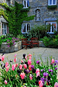 Tulips and garden chairs on Herm, Channel Islands. May 2009. - Eric Baccega