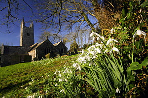 Snowdrops (Galanthus nivalis) flowering near church in spring, UK. - Ross Hoddinott