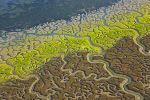 Aerial view of the coast, river beds and saltmarshes of the Bahia / Bay de Cadiz Natural Park, Andalucia, Spain, March 2008 - Juan Carlos Munoz