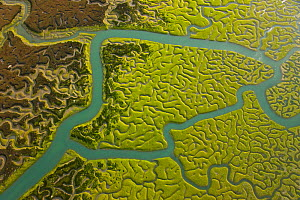 Aerial view of the rivers and saltmarshes of the Bahia / Bay de Cadiz Natural Park, Andalucia, Spain, March 2008 - Juan Carlos Munoz