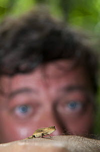 Stephen Fry watching a Dwarf chameleon at Nosy Mangabe, north-eastern Madagascar, while filming BBC TV series 'Last Chance to See', October 2008  -  Mark Carwardine