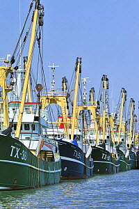 Trawler fishing boats in the harbour of Oudeschild, Texel, the Netherlands, April 2009 - Philippe Clement