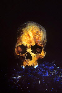 Skull of Japanese Sailor. Truk Lagoon, Chuuk islands, Federated States of Micronesia. - Doc White