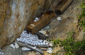 Human skulls of tribesmen at burial site, Papua New Guinea, August 2007 - Mark Brownlow