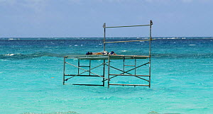 Offshore scaffolding for swimmers, divers etc, French Frigate Shoals, Hawiian Islands, pacific, June 2007 - Mark Brownlow