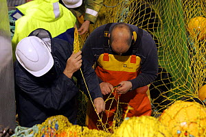 """Deckhands repairing torn net aboard fishing vessel """"Harvester"""", North Sea, August 2008.  Property and Model Released.  -  Philip Stephen"""