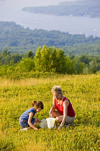 Woman and young girl picking Blueberries on a hilltop in Alton, New Hampshire, USA. Model Released. July 2008  -  Jerry Monkman