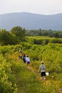 Woman and three children walking through a field on a hilltop after picking Blueberries, Alton, New Hampshire, USA. Model Released. July 2008  -  Jerry Monkman