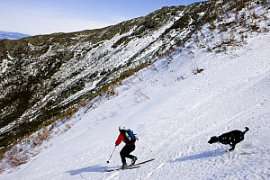 "Telemark skiing (with dog following) ""The Seven"" in the Great Gully on the headwall of King Ravine, White Mountains, New Hampshire, USA. King Ravine is a glacial cirque on the north side of Mount Adam...  -  Jerry Monkman"