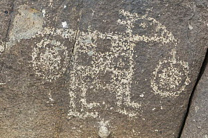 Native American rock engraving from around 1000 to 1400 AD, Three Rivers Petroglyph NRA, New Mexico, USA, February 2009  -  Rob Tilley