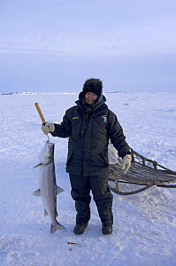 Young Inupiaq woman with Sheefish (Stenodus leucichthys nelma) caught through a hole in pack ice over the Chukchi Sea, for the village elders of Kotzebue, Alaska, March 2008 - Steven Kazlowski