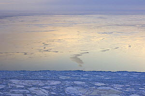 Freshly frozen pack ice off Cape Thompson, 26 miles south of Point Hope, Arctic coast of Alaska, March 2008 - Steven Kazlowski