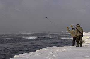 Inupiaq subsistence hunters throwing a hook out to pull in a Ringed seal (Phoca hispida) catch, on the pack ice outside the Arctic village of Point Hope, Chukchi Sea, Alaska, April 2008 - Steven Kazlowski