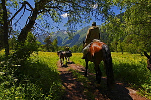 People horse riding through the Arkhyz valley, the western part of the Teberdinsky Biosphere reserve, Caucasus, Russia, July 2008 (Model released) - Wild Wonders of Europe / Schandy